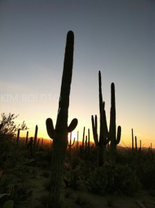 Tucson AZ Attractions