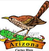Arizona State Bird Cactus Wren