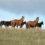 Tucson Real Estate Sales february 2016 Horse Properties