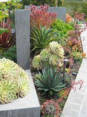 xeriscape walk trim tucson homes az
