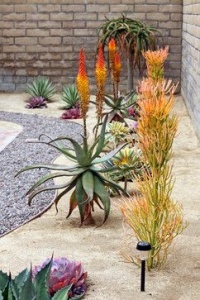 xeriscape tucson home landscaping idea